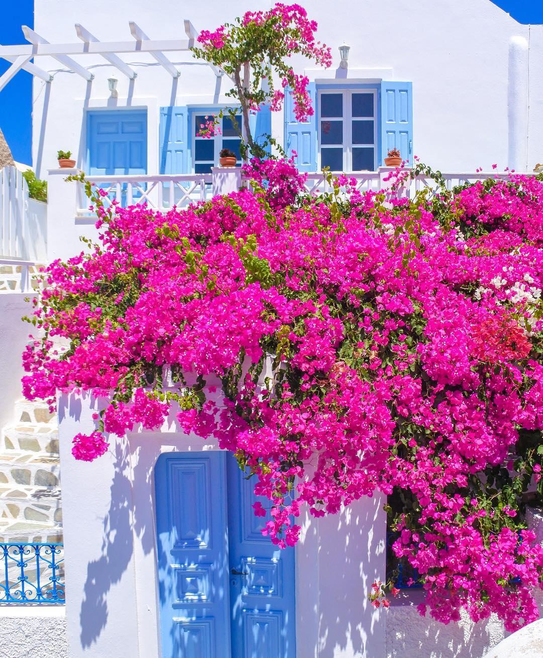 Blooming Santorini